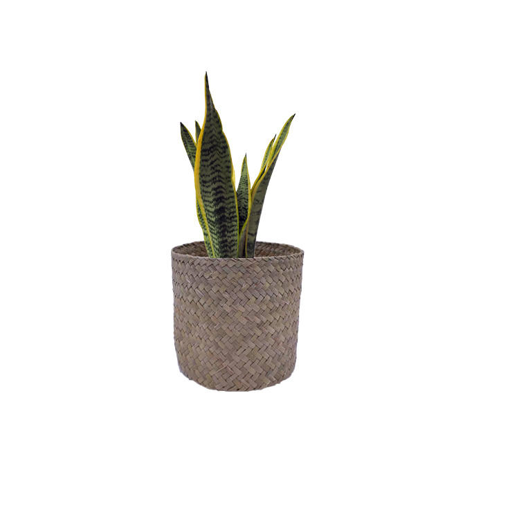 plant pots for plants hot sale popular flower plastic seagrass pot for garden